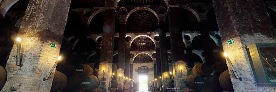 La Catedral Arboledilla